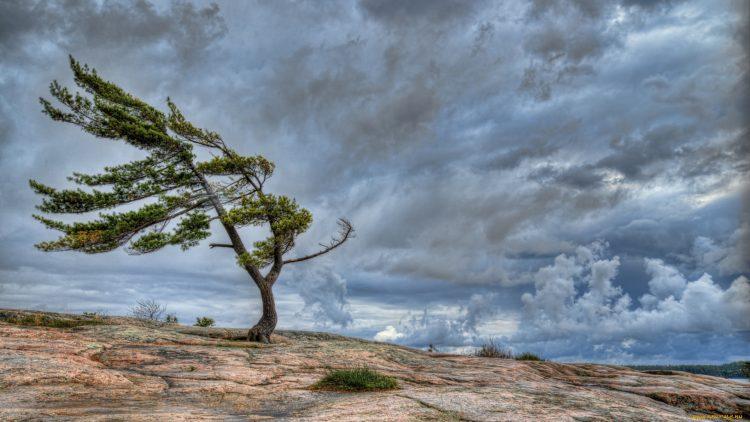 Сегодня, 6 октября, в Днепре и области ожидаются сильные порывы ветра. Спасатели предупредили об этом граждан, чтобы те были максимально осторожными и не пострадали от разрушительных последствий порывов ветра. Новости Днепра