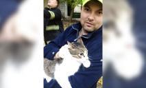 Кот забрался слишком высоко и мог погибнуть