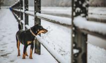 «Зимняя сказка»: на выходных западные регионы Украины засыпало снегом, потрясающие фото