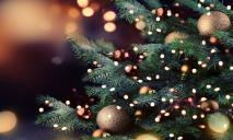 В Днепре устанавливают елку, какой она будет (ФОТО)
