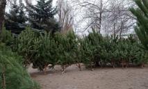 В Днепре накрыли точку продажи елок-нелегалок