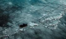 Жестоко издевались, потом убили. На Днепропетровщине не спасли домашнюю собаку (ФОТО)