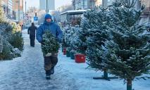 «Праздник уже близко»: где в Днепре купить живую елку