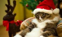 Смело планируйте отдых. Стали известны даты новогодне-рождественских выходных