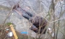 Десятки одноразовых шприцов и мертвое тело: В Днепре на берегу реки девочка нашла труп пенсионерки