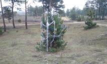 На радость зайчикам и лисичкам: под Днепром елку нарядили прямо в лесу