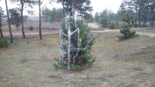 Зеленую красавицу не стали «убивать», а нарядили прямо в лесу. Новости Днепра