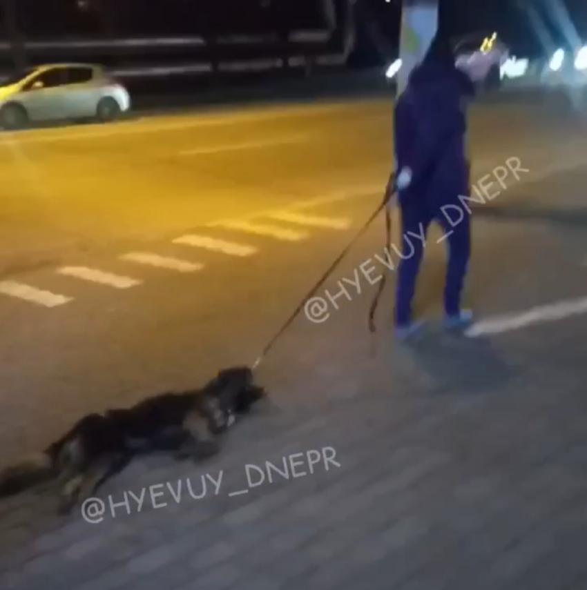 Мертвую собаку тащили. Новости Днепра