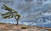 Одевайтесь теплее: в Днепре разгулялся сильный ветер