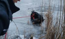 Провалился под лед: втроем спасли жизнь беспомощной собаки
