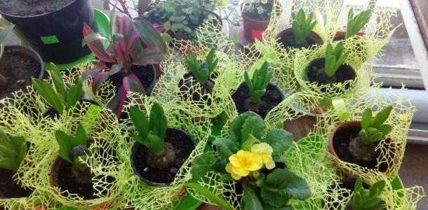 Лучший подарок на 8 марта: в Днепровском ботсаду открылась выставка-продажа цветов