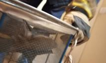 В Днепре летучая мышь залетела в кухню жилого дома
