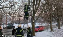 Под Днепром спасли пушистого, который забрался на высокое дерево