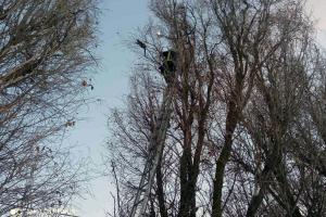 Новости Днепра про Под Днепром спасли пушистого, который забрался на высокое дерево