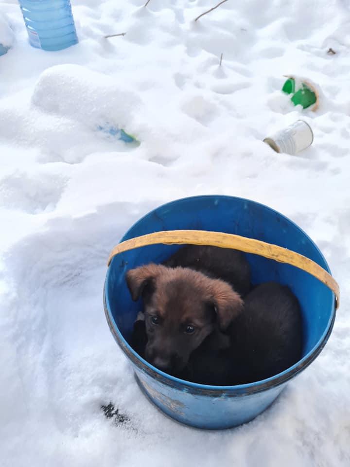 Новости Днепра про «Примерзли к ведру»: в Днепре спасают щенков