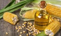 Павлоград станет «кукурузным» городом: производство на 2 000 новых рабочих мест