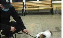 Герой нашего времени: подросток из Кривого Рога вытащил собаку из-подо льда