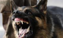 В Днепре немецкая овчарка загрызла маленькую собачку (ВИДЕО)
