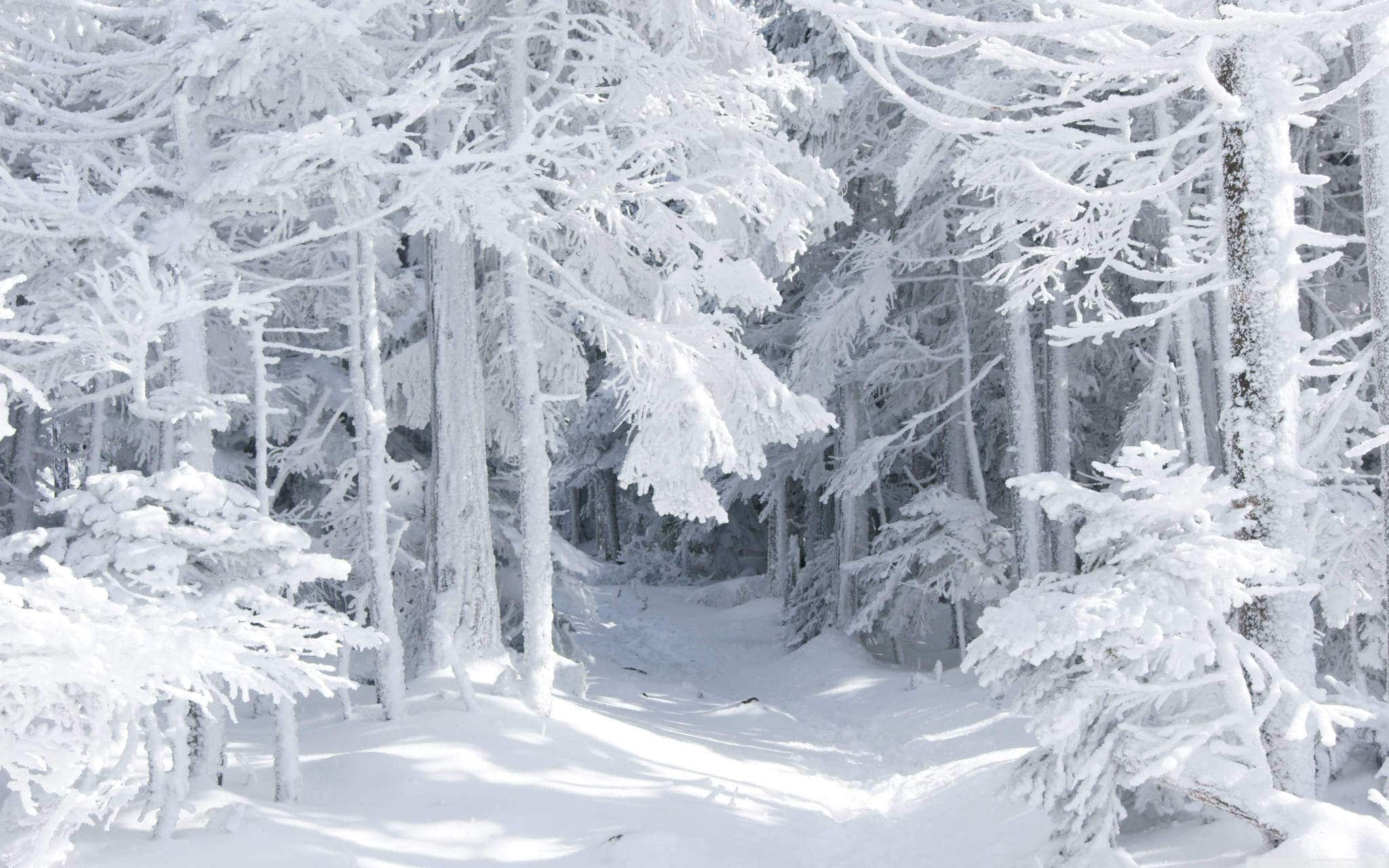 Новости Днепра про Целый день снег: погода в Днепре на 18 февраля