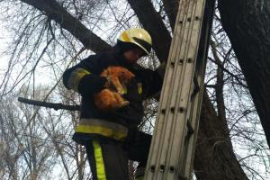 Спасли кота. Новости Днепра
