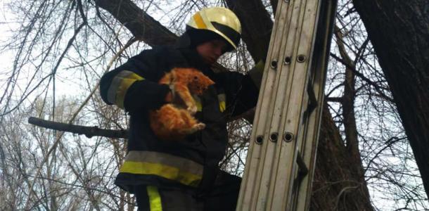 В Днепре спасли рыжего милого котика