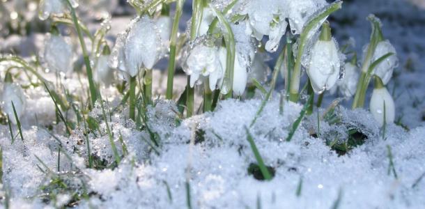 Ветер и снег с дождем: погода на 8 марта 2021