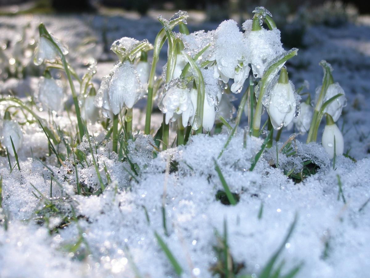 Новости Днепра про Ветер и снег с дождем: погода на 8 марта 2021