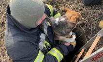 Пес попал в переплет: как его спасали