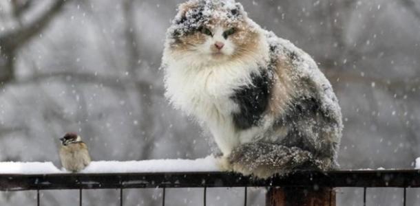 «Опасно»: в Днепре объявлено штормовое предупреждение