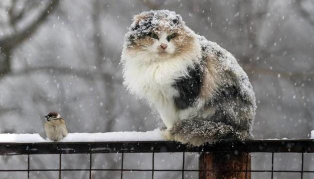 В Днепре и области - плохая погода. Новости Днепра