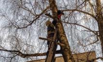 Кот застрял на 9-метровой высоте, как спасали (ФОТО)