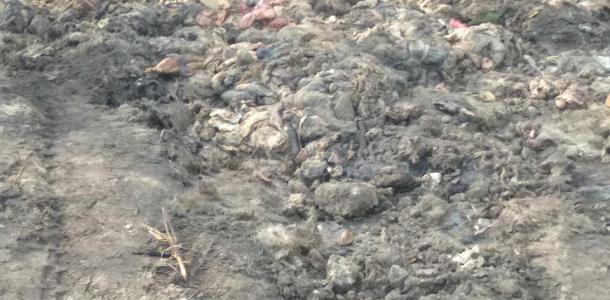 Около 100 тонн кишок: экопатруль обнаружил свалку отходов животного происхождения