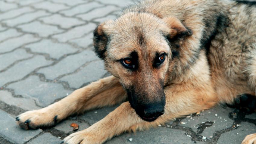 Новости Днепра про «Разрешите нам убивать собак»: на сайте президента появилась странная петиция