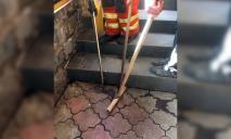 Опасные посетители: в днепровском кафе четверо спасателей поймали дюжину змей