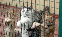 «Бизнес на крови»: В Днепре борются с незаконной торговлей домашними животными