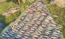 Выловили 100 килограмм рыбы во время нереста: полиция задержала нарушителей
