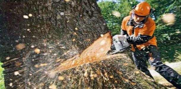 Тополь облысеет: на жилмассиве планируют ликвидировать более 600 деревьев