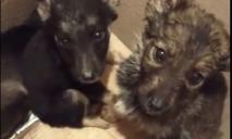 Люди выбросили новорожденных щенков на улицу. Трое погибли.