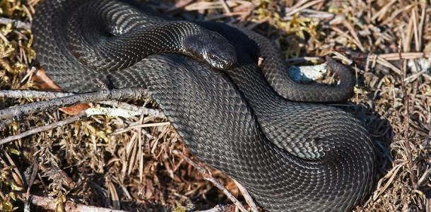 Возле детской поликлиники в Днепре опасные змеи греются на солнышке (ВИДЕО)