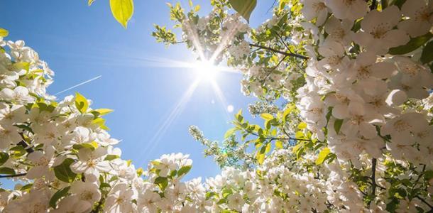 Настоящая весна: сегодня в Днепре хорошая погода