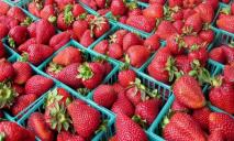 Сезон клубники набирает обороты: сколько стоит ягода