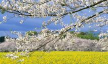 8 мая: какой праздник, приметы, именины, что нельзя делать