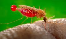 Смертельная малярия из Африки уже в Украине: первые случаи