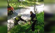 Как в Днепре спасали агрессивного пса из заброшенного коллектора