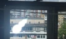 «Крепкий орешек»: в Киеве «белка-альпинист» по стене забралась на шестой этаж