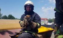 Под Днепром спасли котенка, который забрался в вентиляционную шахту кафе (ФОТО)