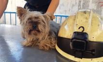 В Днепре спасатели достали собаку из глубокой ямы