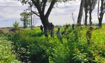 На Днепропетровщине нашли гигантское дерево возрастом больше века