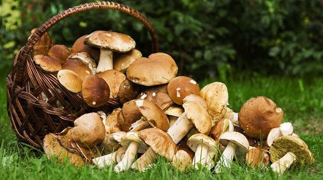 Новости Днепра про Стартовал летний сезон грибов: как обезопасить себя
