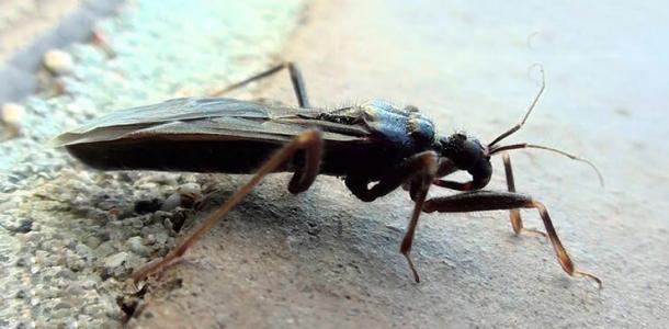 В Днепре опасные насекомые атакуют многоэтажки